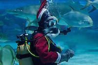 Santa Shark Feeding 2014