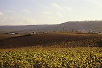 Europe/France/Champagne-Ardenne/51/Marne/Chamery: Vignoble champenois
