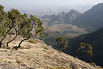 Simien Mountains National Park, Ethiopia, 3260m 10,700ft high, escarpment edge near Buyit Ras.Africa....