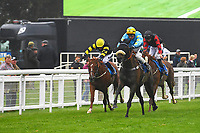 Winner of The Champagne Joseph Perrier Confined Handicap, Blistering Bob ridden by William Cox and trained by Roger Teal  during Horse Racing at Salisbury Racecourse on 14th August 2019