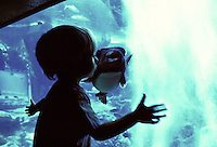 Two year old boy bonding with a puffer fish at the Waikiki aquarium