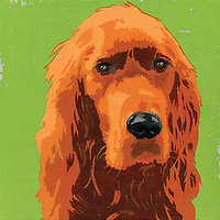 Portrait of Red Setter dog ExclusiveImage