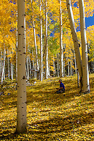 A photographer capturing the changing colors of Aspen trees in the San Juan Mountains of Colorado.