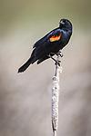 Bird Photography with Gordon MacPherson. Photo Credit: Sergei Belski