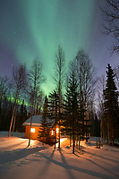 Aurora borealis and boreal forest in Fairbanks, Alaska.