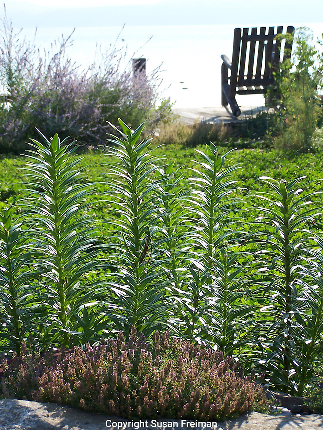 Photos from August, 2011 Joan Gussow's garden,