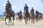 November 1, 2018: Mendelssohn, trained by Aidan P. O'Brien, exercises in preparation for the Breeders' Cup Classic at Churchill Downs on November 1, 2018 in Louisville, Kentucky. Jamey Price/Eclipse Sportswire/CSM