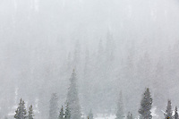 Snow and trees abstract, Independence Pass