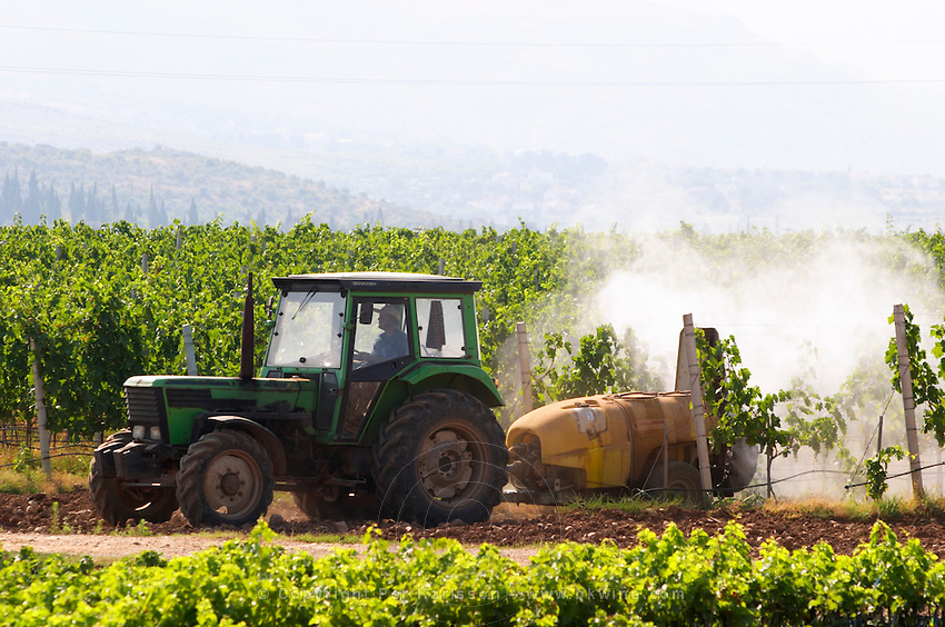 A vineyard tractor spraying with treatment for diseases between the rows of vines. Vineyard on the plain near Mostar city. Hercegovina Vino, Mostar. Federation Bosne i Hercegovine. Bosnia Herzegovina, Europe.