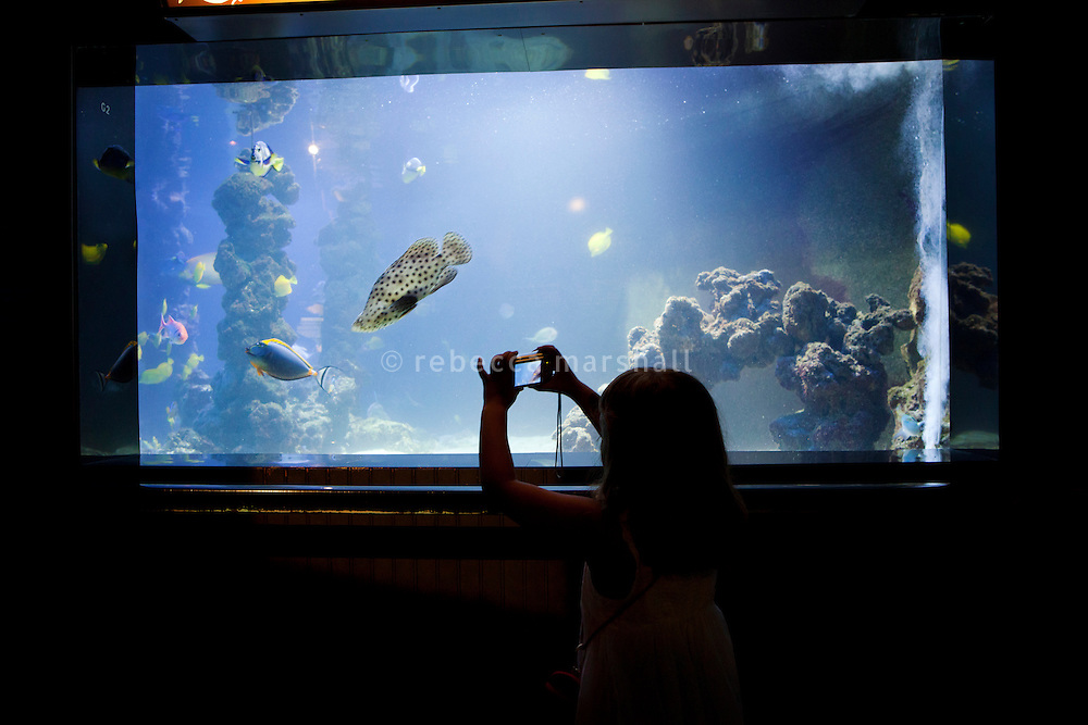 A young girl photographs Mérou Grace Kelly (Polka-dot Grouper) in one of the tropical aquariums at the Musée Océanographique, Monaco, 5 July 2013