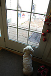 The dog watches as she waits for everyone to return back inside from Alex's first day in the snow with the family December 2009.