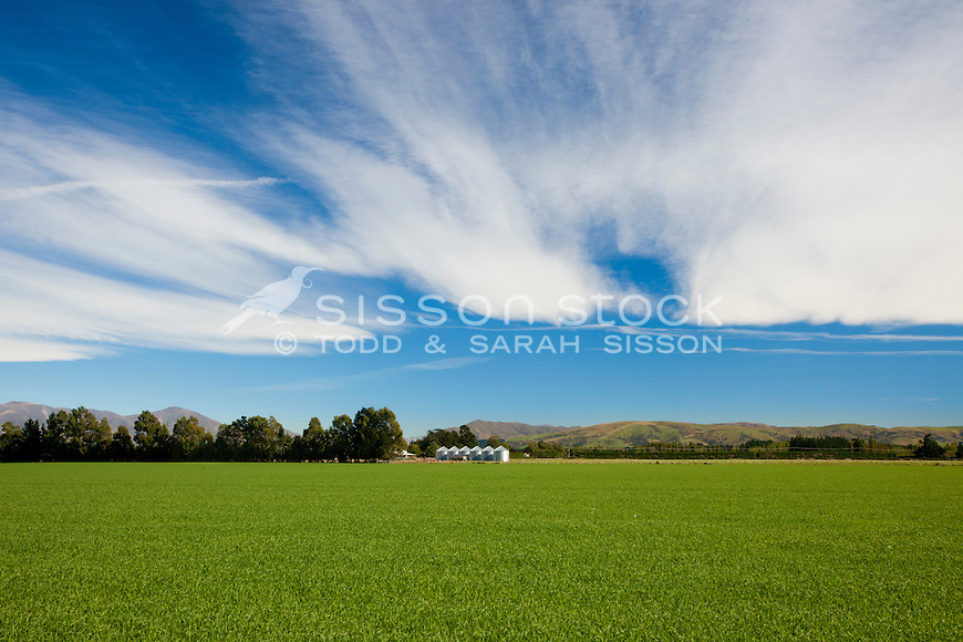 Green fields and grain silos in Canterbury, South Island, New Zealand