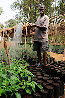 SIERRA LEONE Grafton, irrigation of  tree nursery of NGO CHELSol, protection of forest in Western Area Peninsula WAPFoR / SIERRA LEONE Grafton , Projekt der Welthungerhilfe - Bewahrung des Waldschutzgebietes der Western Area Peninsula und ihres Wassereinzugsgebietes WAPFoR , lokale NGO CHELSoL Ip Aufforstung und Baumschule