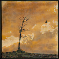 Mixed media encaustic photo transfer of bare tree in golden sky by Jeff League.