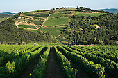 Vineyards in Chianti region, Tuscany, Italy