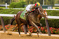 """ELMONT, NEW YORK - OCT 7: Firenze Fire #12, ridden by Irad Ortiz Jr., wins the Champagne Stakes, a """"Win & You're In' event, at Belmont Park on October 6, 2017 in Elmont, New York. ( Photo by Eclipse Sportswire/Getty Images)"""