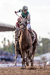 November 2, 2019 : Blue Prize, ridden by Joe Bravo, wins the Longines Breeders' Cup Distaff on Breeders' Cup Championship Saturday at Santa Anita Park in Arcadia, California on November 2, 2019. Alex Evers/Eclipse Sportswire/Breeders' Cup/CSM