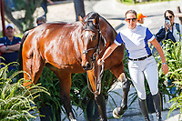 USA-Laura Kraut presents Fleurette during the Horse Inspection. 2019 ESP-CSIO Barcelona - Longines FEI Nations Cup Jumping Final. Wednesday 2 October. Copyright Photo: Libby Law Photography