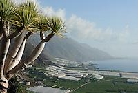 Spain, Canary Islands, La Palma, near Puerto Naos: banana plantations and green houses an the west coast