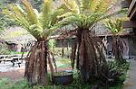 Ferns at Rancho Del Oso Nature Center