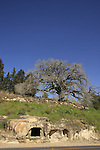 Israel, Menashe Heights, an ancient burial cave by road 6953