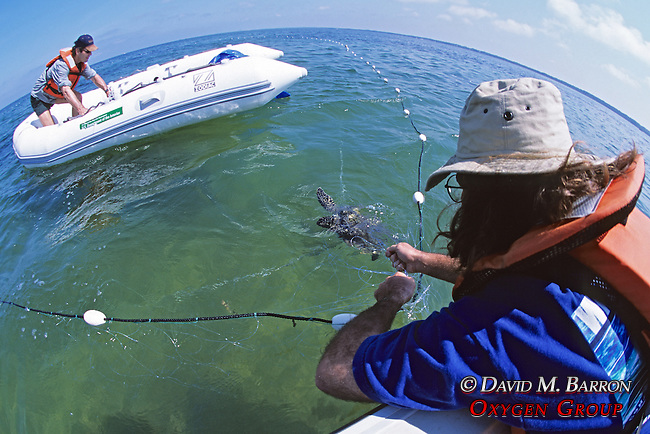 Jeff & James Capturing Green Turtle