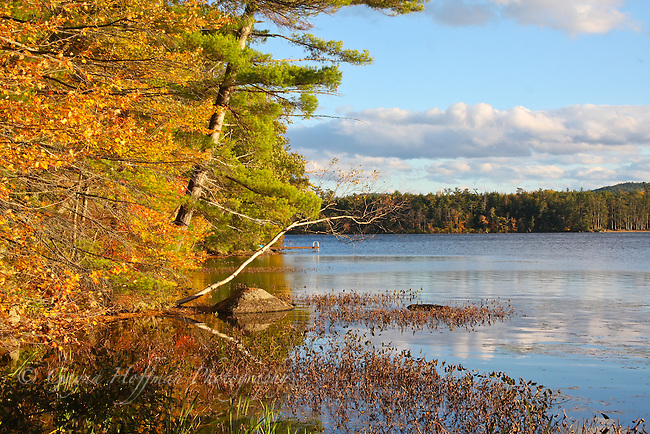 Fall scenic. Kezar Lake, Sutton, NH