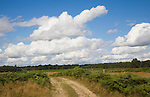 White fluffy cumulus clouds over countryside, Suffolk, England