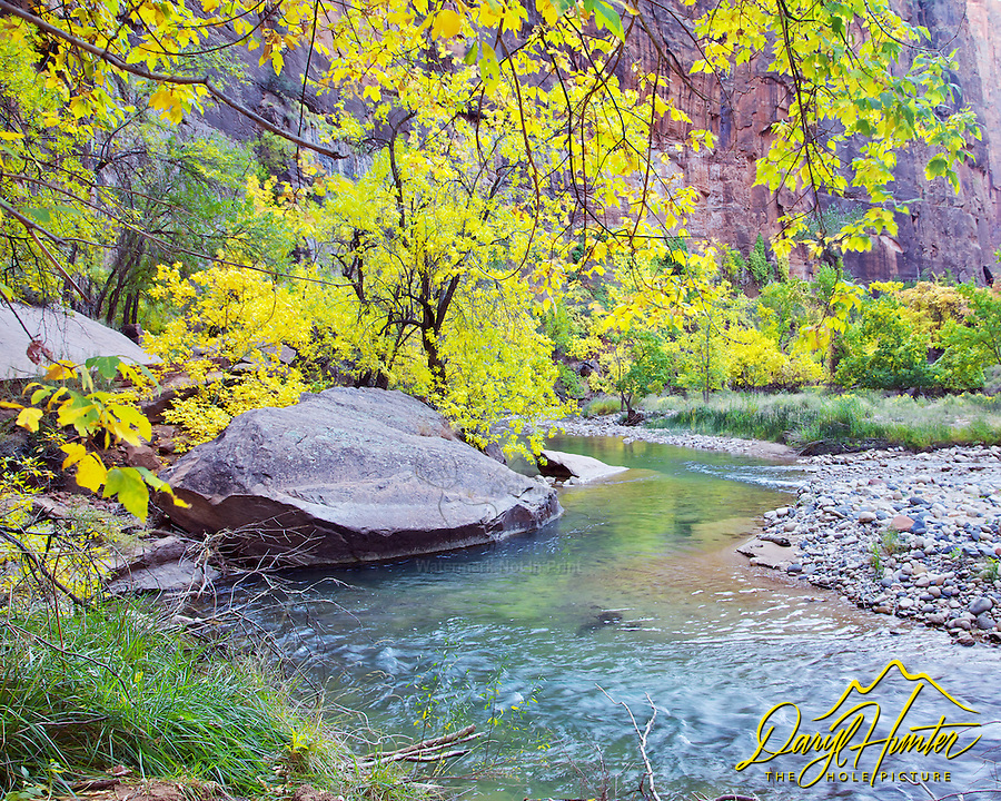 Virgin River, Fall Colors, Zion National Park