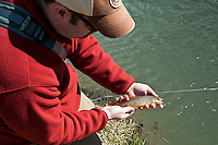 An angler releases a brown trout while fly fishing in the Driftless Area of southwest Wisconsin.
