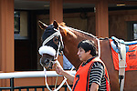 August 29, 2015. Nibiru's Return walks in the paddock before race 8, a one and 1/8 mile allowance on the turf. Undercard races and scenes around the track on Smarty Jones Stakes Day at  Parx Racing in Bensalem, PA.  (Joan Fairman Kanes/ESW/CSM)