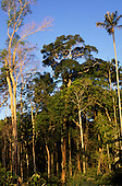 Amazon, Brazil. Trees at the edge of the forest. Sunny, blue sky.