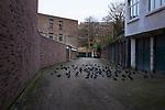 Backstreet Pigeons, Ixelles, Brussels, Belgium.