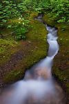 Alpine Stream, Jasper National Park, Alberta, Canada