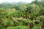 Amazonia, Brazil. Lush secondary Amazonian forest with primary forest behind.