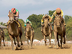 Takecharge Mirella (no. 4) wins the Race 7, Sep. 2, 2018 at the Saratoga Race Course, Saratoga Springs, NY.  Ridden by Jose Bravo, and trained by Kiaran McLaughlin, Takecharge Mirella finished a scant nose  in front of Stand for the Flag (No. 9).   (Bruce Dudek/Eclipse Sportswire)