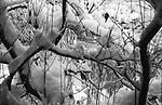 Winter Branches, Elmira, NY