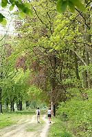 Beukenlaan in het voorjaar, Leemputten - Brabants lAndschap