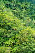 Tanna, forêt de fougères arborescentes
