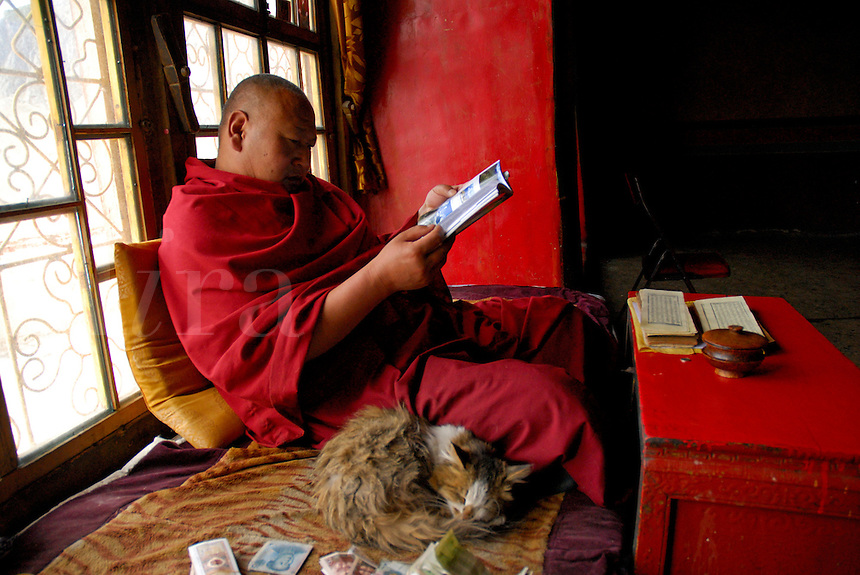 Buddhist Gelugpa monk with his cat, prayer book and donated money, looks at my travel guide, Drepung monastery, Lhasa, Tibet, China.