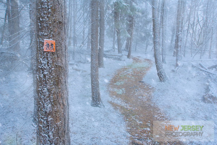Snow falling on a woodland trail, Allumuchy State Park, Skylands Region, New Jersey