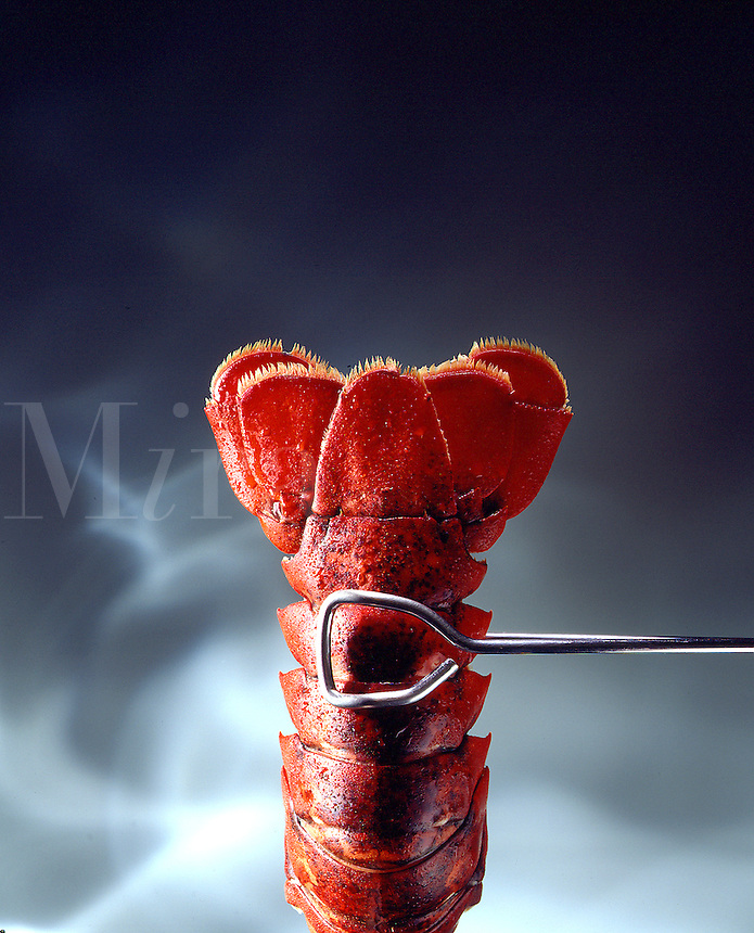 Lobster tail held up against creative background.