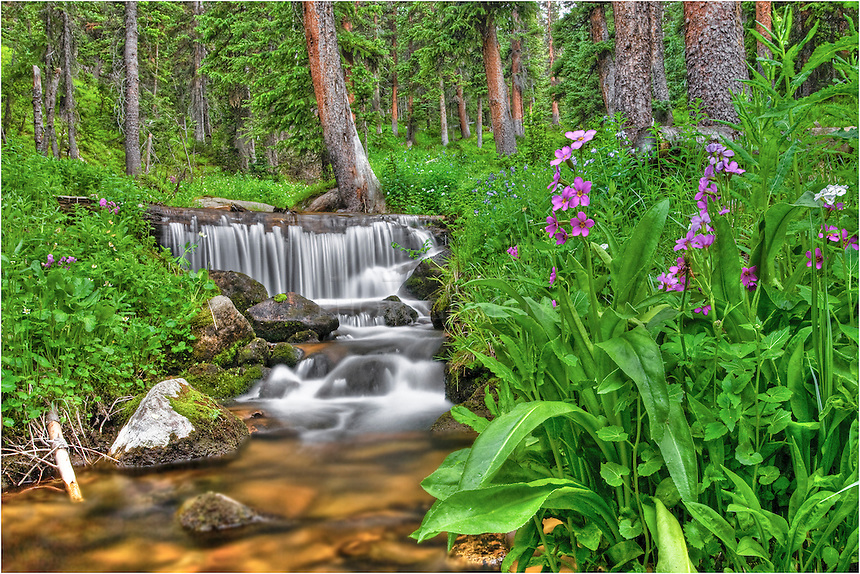 Flowing down from melting snows, the cold waters of First Creek in Grand County nourish Colorado's early season wildflowers. Intimate images such as this are common if  you are willing to get your feet wet and hike along some of these beautiful streams in Coloardo's high country.