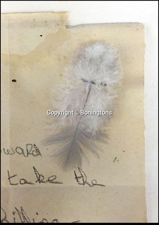BNPS.co.uk (01202 558833)<br /> Pic: Boningtons/BNPS<br /> <br /> A white feather was the mark of a coward.<br /> <br /> A powerful reminder of the strong emotions generated on the Home Front during WW1 has been revealed by a stark letter delivered to 'coward' who had not joined up and 'done his bit'.<br /> <br /> The shaming letter - probably given to a man still in civilian clothes by a lady: would have been the most embarrassing occasion one would imagine<br /> <br /> Today a person on the wrong side of public opinion would be the victim of Twitter trolls, but a century ago men who were thought not to be doing their bit for the war effort were publicly shamed.<br /> <br /> The letter has attached to it a white feather which was the traditional symbol of cowardice.<br /> <br /> It will be auctioned at Boningtons Auctioneers tomorrow (mon).