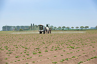 Blight spraying potatoes - Lincolnshire, May