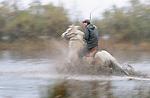 Horseman rides through marsh, Ile de la Camargue, France