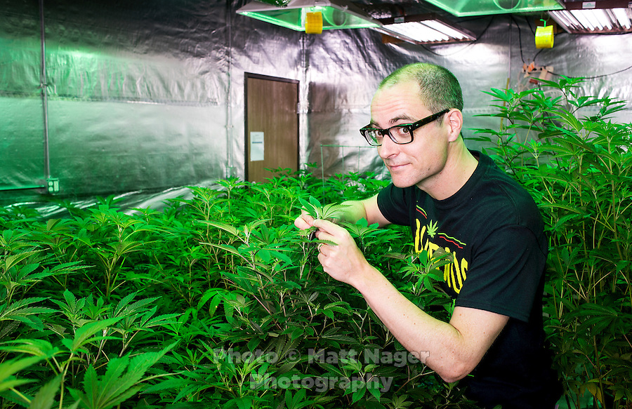 Reporter Harry Wallop in the Medicine Man &quot;Green Mile&quot; marijuana grow house during a Colorado Cannabis Tour in Denver, Colorado, Friday, September 30, 2016. <br /> <br /> Photo by Matt Nager
