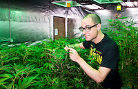 "Reporter Harry Wallop in the Medicine Man ""Green Mile"" marijuana grow house during a Colorado Cannabis Tour in Denver, Colorado, Friday, September 30, 2016. <br /> <br /> Photo by Matt Nager"
