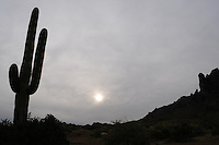 Apache Junction, Arizona. The Saguaro Cactus is native to the Sonoran Desert in the state of Arizona. Combined with sunsets, saguaro cactus and other species of the flora create spectacular scenery typical of the American Southwest. This photograph shows saguaro cacti (Carnegiea gigantean its scientific name), which are found exclusively in the Sonoran Desert, and are large, tree-like columnar plants that grow arms (or branches) over time. This area is part of the Lost Dutchman State Park is located in the area of the Superstition Mountains in the Sonoran Desert, 40 miles east of Phoenix, Arizona. The park takes its name from a fabled lost gold mine. Photo by Eduardo Barraza © 2013