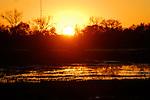 sunset at Consumnes River Preserve